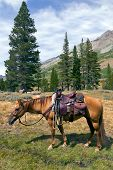 Red Dun mountain horse under saddle saddle bags rain slicker Summer Emigrant Wilderness Stanislaus National Forest California poster