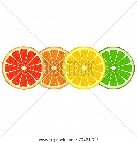 Four bright citrus slices of grapefruit, orange, lemon and lime poster