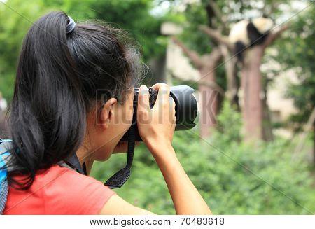 woman photographer taking photo of panda