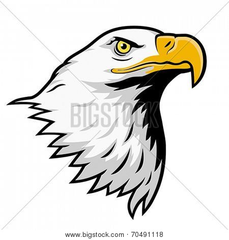 American bald eagle, color version.