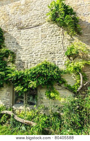Old Stone House With Green Trees Ivy, England