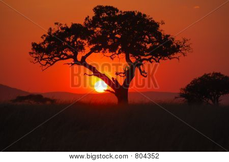 African Sunset