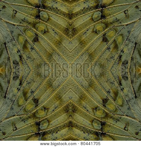 Details of Background Pattern made of Great Marquis butterfly wing skin texture