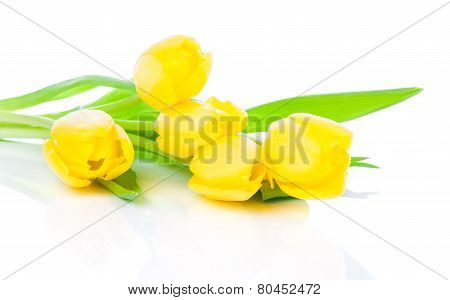 Bouquet Of Yellow Tulips, Isolated On White Background