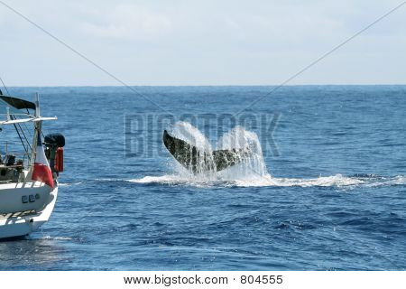 boat and whale tail