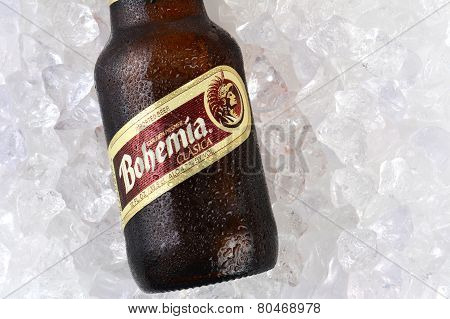 Bohemia Beer On Ice Closeup