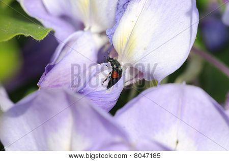 Insekt auf einer Blume