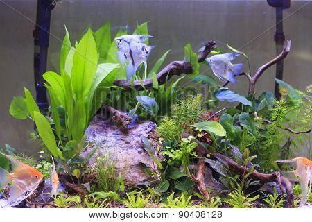 Aquarium And Scalar