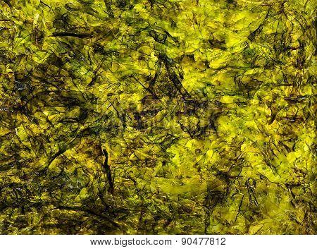 Abstraction seaweed Laminaria