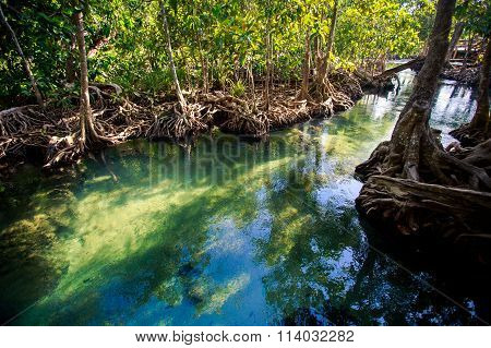 Bright Green Blue River Among Mangrove Trees Under Sunlight