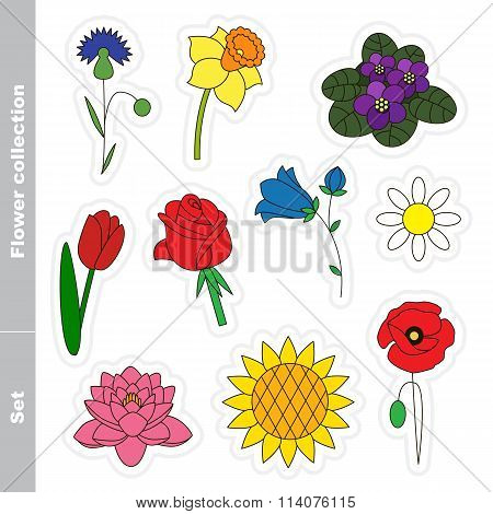 Flower Set Colorful.