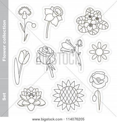 Flower Set In Vector.