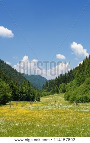 Summer landscape. Green meadow with flowers in valley. Forest on mountain slopes. Sunny day, good weather. Carpathians, Ukraine, Europe. Beautiful world