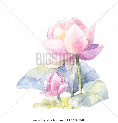 Watercolor pink lotus