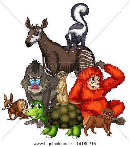 Wild animals on white background illustration