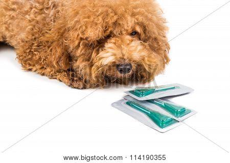 Dog Next To Medicine For  Ticks, Fleas And Lice Control