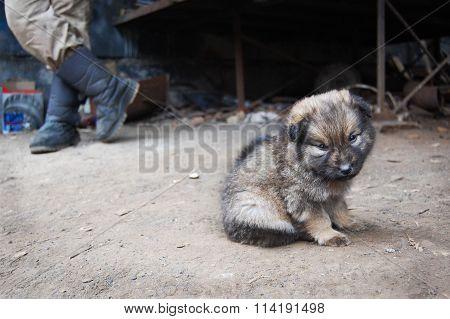 Homeless puppy near man legs