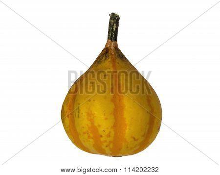 Pumpkin 10 isolated
