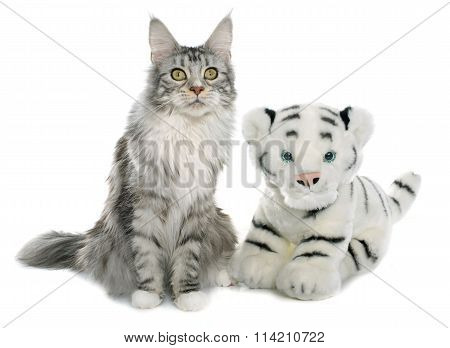 Maine Coon Cat And Tiger Toy