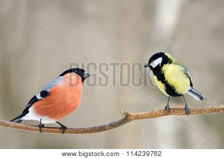 bullfinch and titmouse on a branch