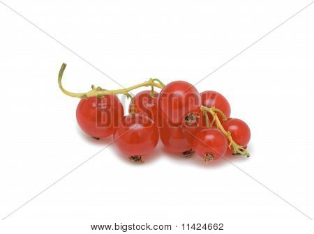 Red Currant, Isolated