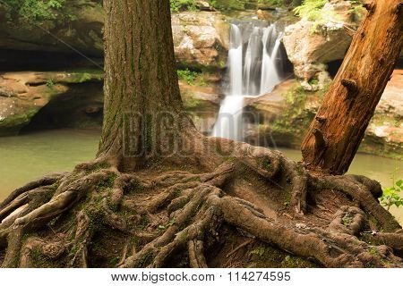Exposed tree roots in front of Upper Falls at Hocking Hills State Park Ohio.