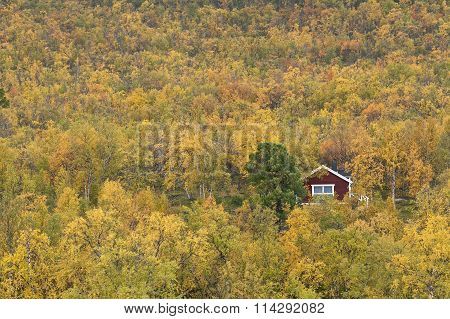 Red and white cabin in the mountain birch forest.