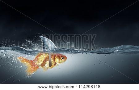 Gold fish with shark flip
