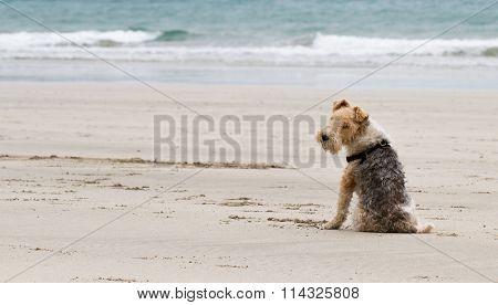 Obedient Beach Dog
