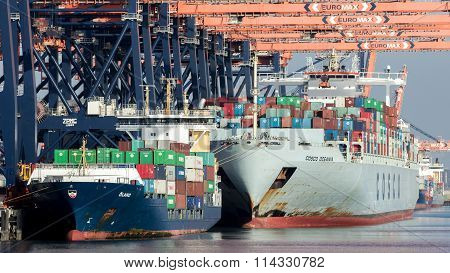 Container Terminal Shipping