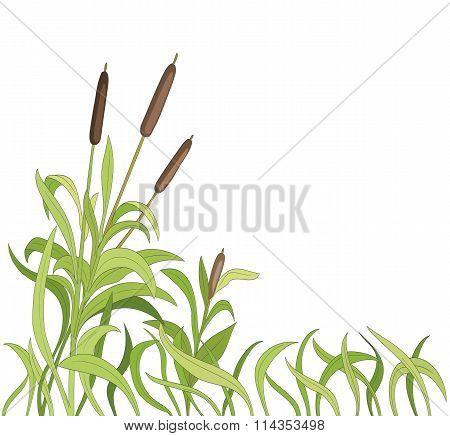 Cartoon Reeds Background