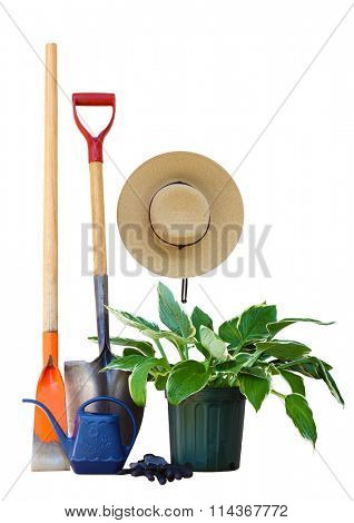 Garden tools and hosta plant isolated on white