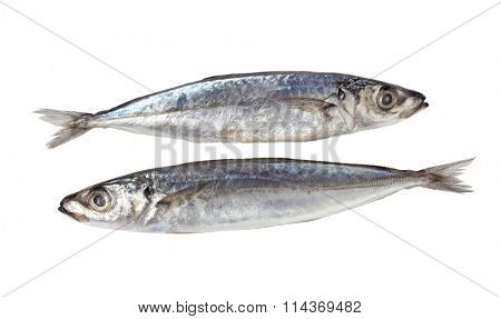 Two Decapterus fishes isolated on white background