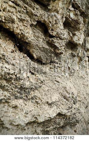 Limestone Sedimentary Rock Of Organic Origin
