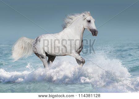 Horse run in water