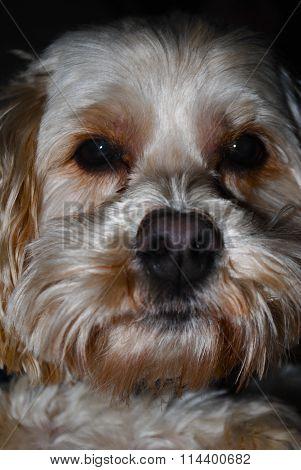 Close Up Dog