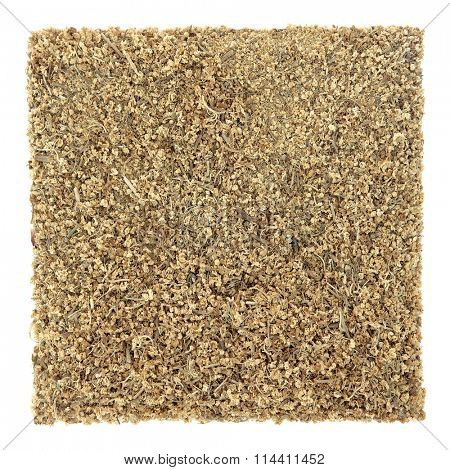Elderflower herb used in natural alternative herbal medicine over white background. Sambucus.