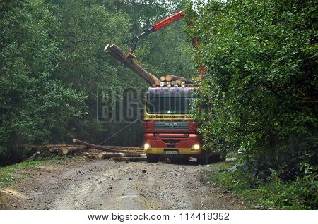 Loading A Timber Truck With Freshly Chopped Tree Trunks In The Forest