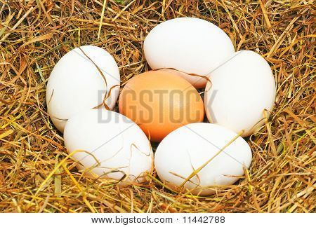 Five White Eggs And One Yellow Egg