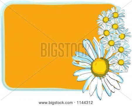 Daisies Floral Frame - Vector Illustration
