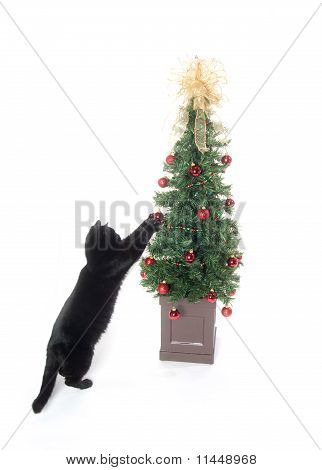 Black Cat And Christmas Tree