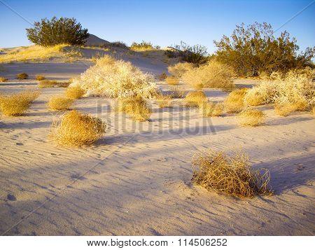 Tumbleweeds Of Mojave Desert