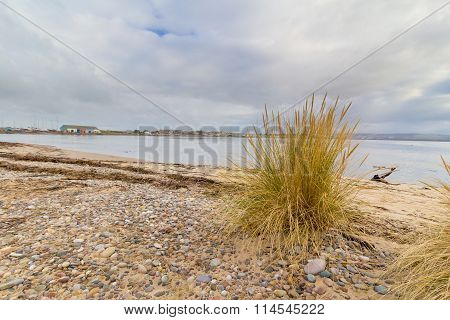 Stoney beach with grass plant, Findhorn, Scotland