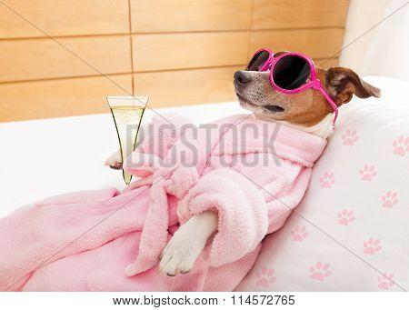 Relax Spa Wellness Dog