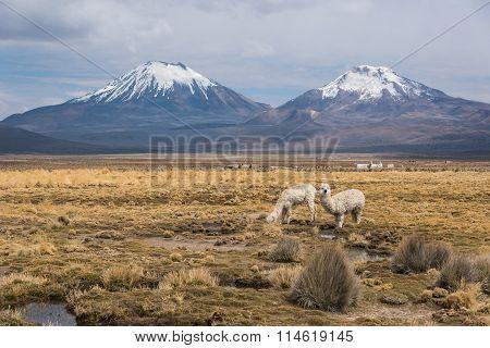 Panorama Of Altiplano