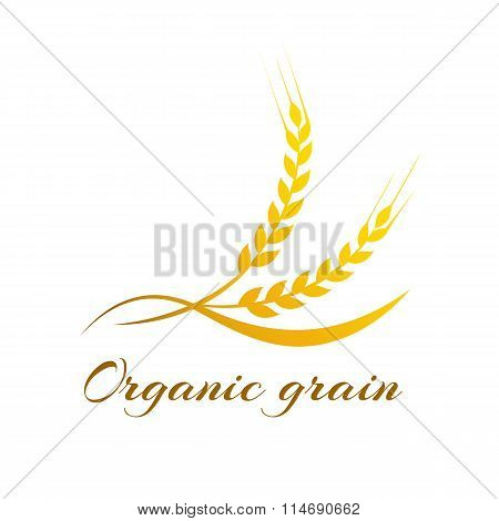 Ears of Wheat, Vector Illustration, Icon of Premium Quality Farm Product