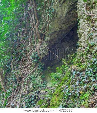 Cleft In The Rock And Tree Roots.