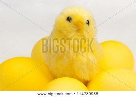 yellow chicken on white