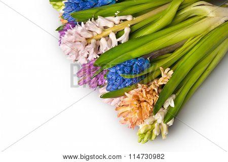 hyacinth isolated on white
