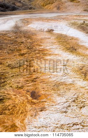 Palette Spring in Mammoth Hot Springs thermal area Yellowstone National Park Wyoming USA